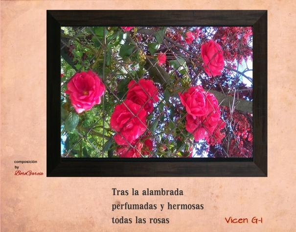 haikus rosas y alambrada.jpg